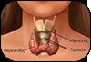 Θυρεοειδής αδένας | Ενδοκρινικές διαταραχές - παθήσεις